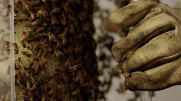 Μέλισσες σε ρόλο 3D εκτυπωτή (13)