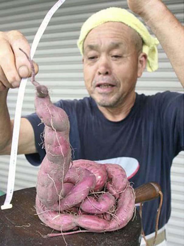 Μεταλλαγμένα προϊόντα από την Φουκουσίμα (4)