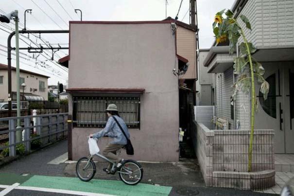 Μεταλλαγμένα προϊόντα από την Φουκουσίμα (8)