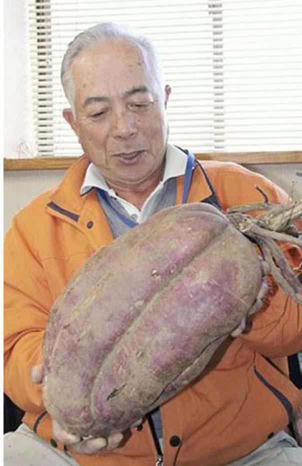 Μεταλλαγμένα προϊόντα από την Φουκουσίμα (9)