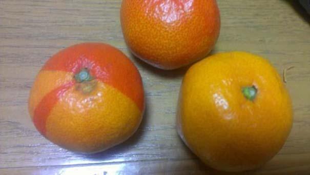 Μεταλλαγμένα προϊόντα από την Φουκουσίμα (14)