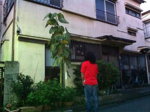 Μεταλλαγμένα προϊόντα από την Φουκουσίμα (17)