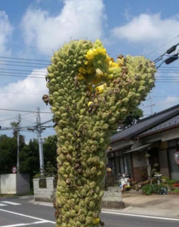 Μεταλλαγμένα προϊόντα από την Φουκουσίμα (33)