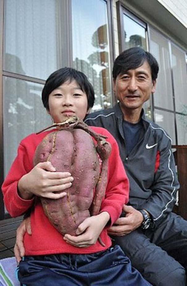 Μεταλλαγμένα προϊόντα από την Φουκουσίμα (35)