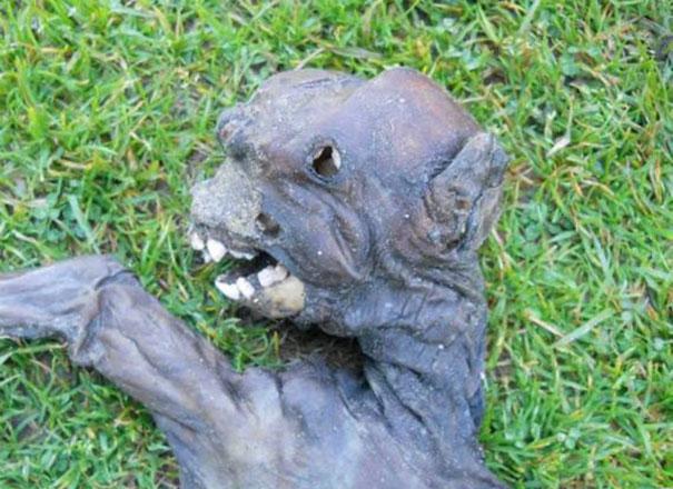 Μυστυριώδες πλάσμα προκάλεσε αναστάτωση στη Νότια Αφρική (2)