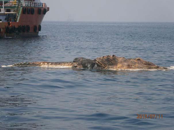 Περίεργο πλάσμα στον Περσικό Κόλπο (3)