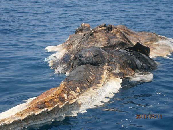 Περίεργο πλάσμα στον Περσικό Κόλπο (5)