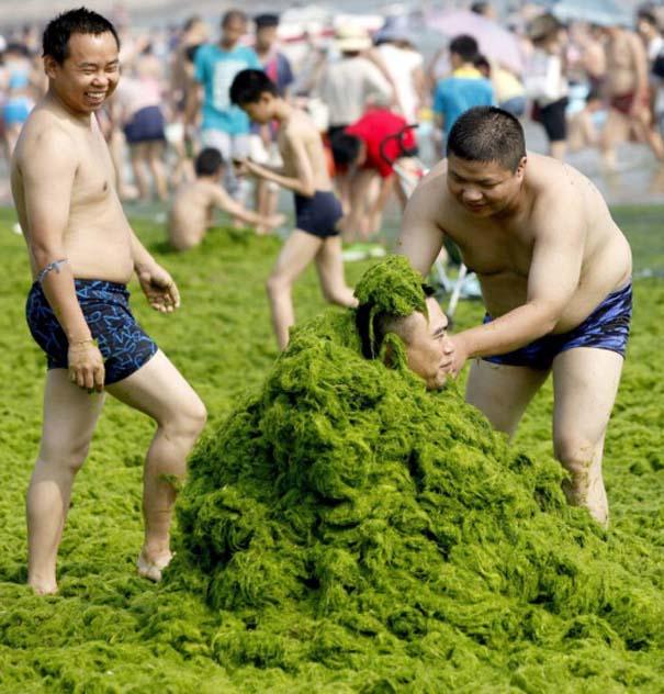«Θάλασσα» από πράσινο στις ακτές της Κίνας (14)