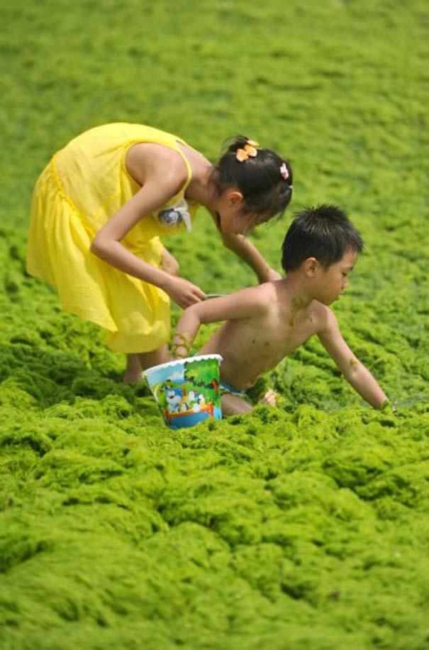 «Θάλασσα» από πράσινο στις ακτές της Κίνας (9)