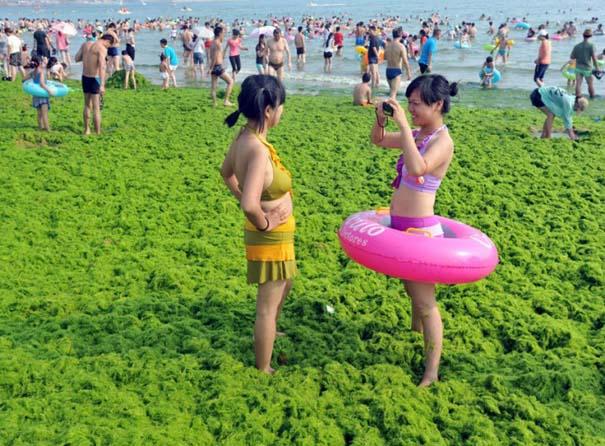 «Θάλασσα» από πράσινο στις ακτές της Κίνας (11)