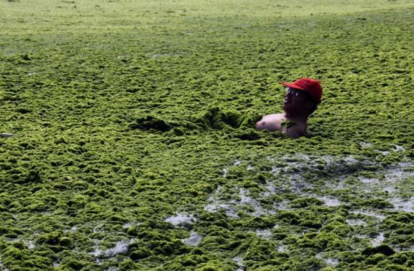 «Θάλασσα» από πράσινο στις ακτές της Κίνας (12)