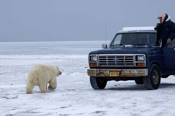 Απροσδόκητη συνάντηση στην Αλάσκα (1)