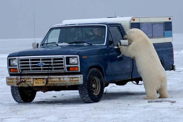 Απροσδόκητη συνάντηση στην Αλάσκα (2)