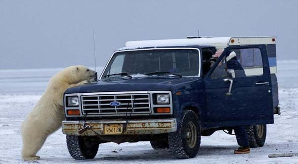 Απροσδόκητη συνάντηση στην Αλάσκα (5)