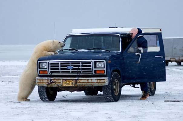 Απροσδόκητη συνάντηση στην Αλάσκα (6)