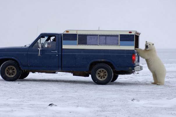Απροσδόκητη συνάντηση στην Αλάσκα (9)