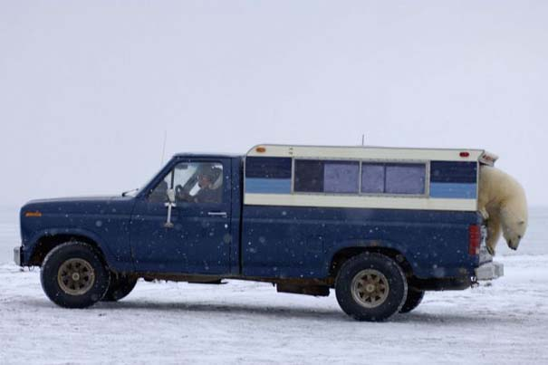Απροσδόκητη συνάντηση στην Αλάσκα (11)