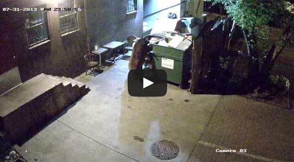 Αρκούδα έκλεψε ολόκληρο τον κάδο σκουπιδιών έξω από εστιατόριο