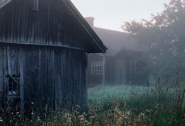 Εγκαταλελειμμένο σπίτι στο δάσος έχει αποκτήσει ενδιαφέροντες νέους κατοίκους (2)