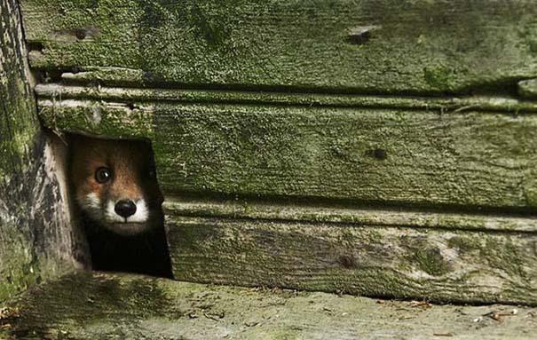 Εγκαταλελειμμένο σπίτι στο δάσος έχει αποκτήσει ενδιαφέροντες νέους κατοίκους (3)