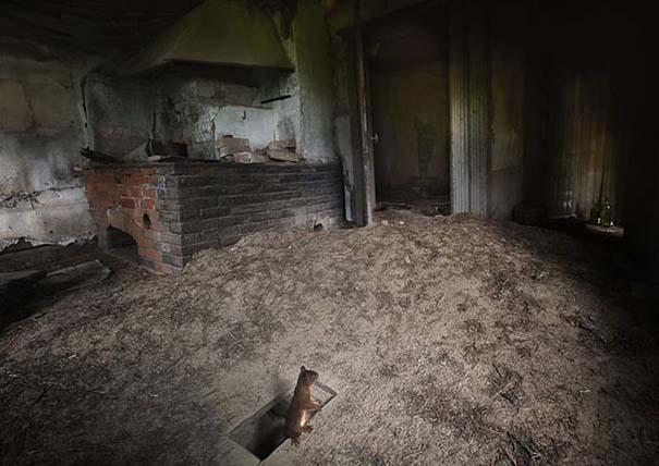 Εγκαταλελειμμένο σπίτι στο δάσος έχει αποκτήσει ενδιαφέροντες νέους κατοίκους (4)