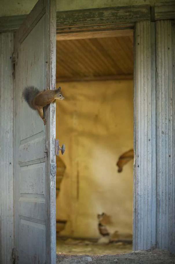 Εγκαταλελειμμένο σπίτι στο δάσος έχει αποκτήσει ενδιαφέροντες νέους κατοίκους (5)