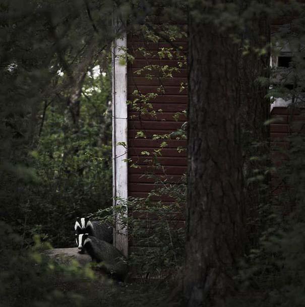 Εγκαταλελειμμένο σπίτι στο δάσος έχει αποκτήσει ενδιαφέροντες νέους κατοίκους (6)