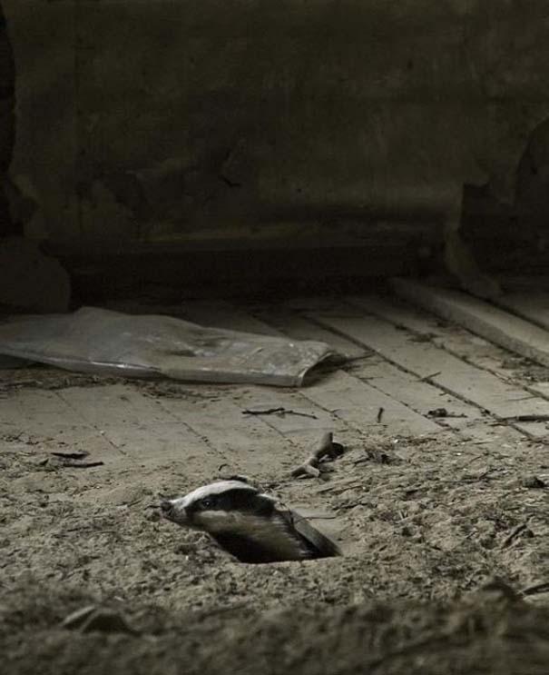Εγκαταλελειμμένο σπίτι στο δάσος έχει αποκτήσει ενδιαφέροντες νέους κατοίκους (8)