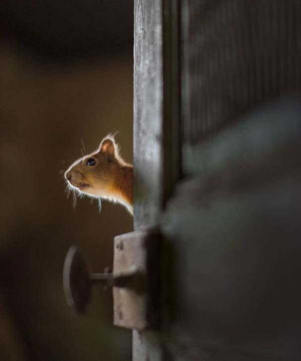 Εγκαταλελειμμένο σπίτι στο δάσος έχει αποκτήσει ενδιαφέροντες νέους κατοίκους (14)