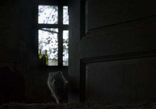 Εγκαταλελειμμένο σπίτι στο δάσος έχει αποκτήσει ενδιαφέροντες νέους κατοίκους (20)