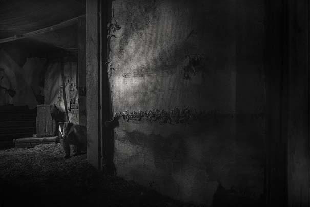 Εγκαταλελειμμένο σπίτι στο δάσος έχει αποκτήσει ενδιαφέροντες νέους κατοίκους (21)