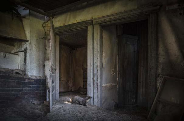 Εγκαταλελειμμένο σπίτι στο δάσος έχει αποκτήσει ενδιαφέροντες νέους κατοίκους (22)