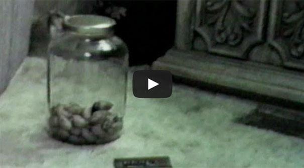 Έξυπνο ποντίκι κλέβει τροφή από κλειστό βάζο