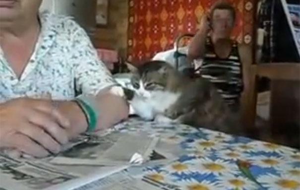 Γάτα χρησιμοποιεί τη νοηματική γλώσσα