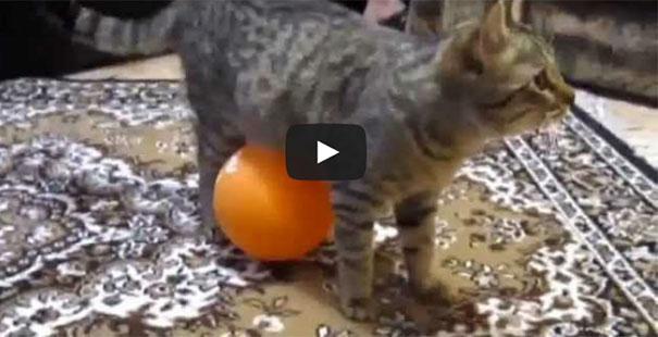 Γάτα «βραχυκυκλώνει» από μπαλόνι με στατικό ηλεκτρισμό που κολλάει πάνω της