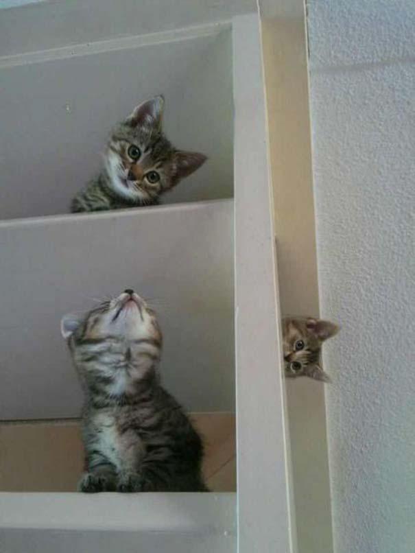 Γάτες που... κάνουν τα δικά τους! (1)