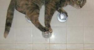 Γάτες που… κάνουν τα δικά τους! #8