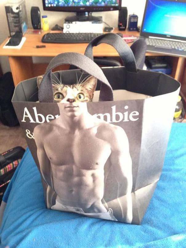 Γάτες που... κάνουν τα δικά τους! (11)