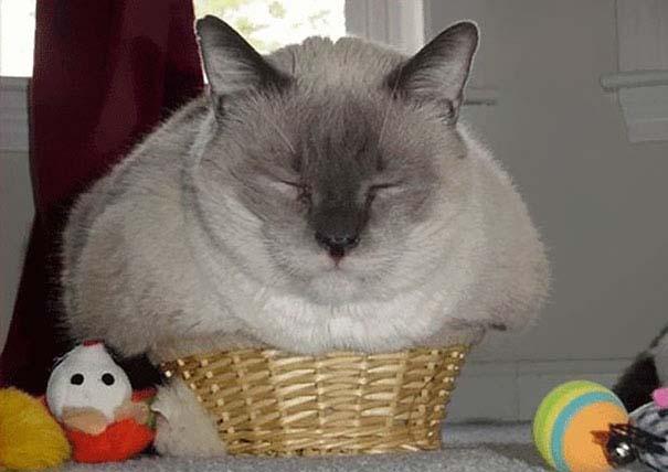 Γάτες που... κάνουν τα δικά τους! (20)