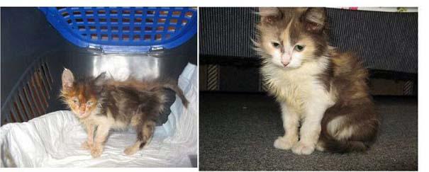 Γάτες πριν και μετά τη διάσωση τους (2)