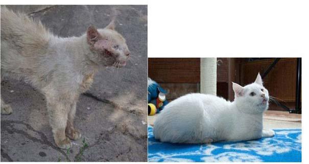 Γάτες πριν και μετά τη διάσωση τους (3)