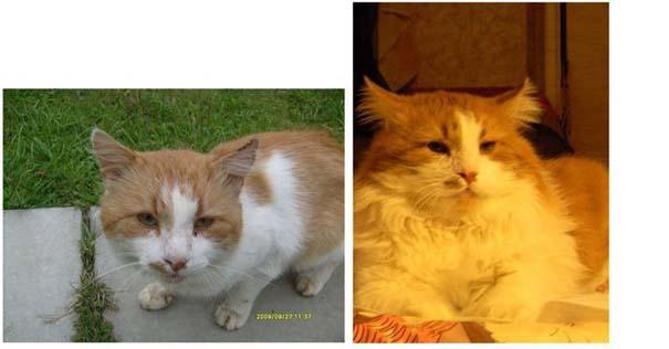 Γάτες πριν και μετά τη διάσωση τους (4)