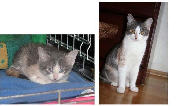 Γάτες πριν και μετά τη διάσωση τους (5)