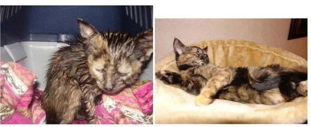 Γάτες πριν και μετά τη διάσωση τους (6)