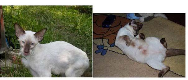 Γάτες πριν και μετά τη διάσωση τους (7)