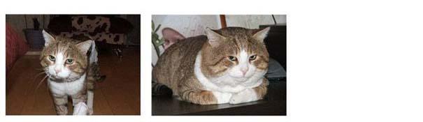 Γάτες πριν και μετά τη διάσωση τους (8)