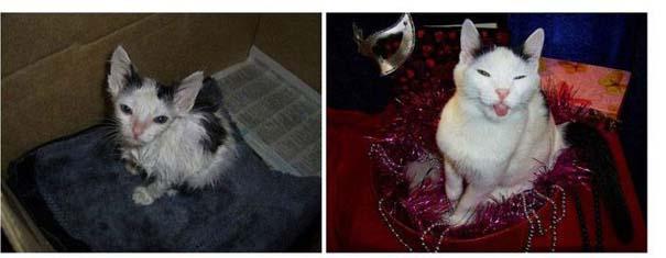 Γάτες πριν και μετά τη διάσωση τους (9)