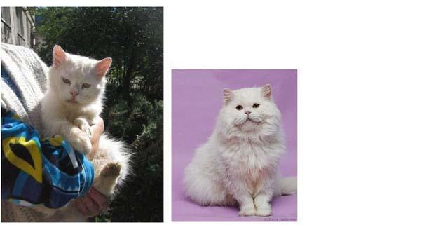 Γάτες πριν και μετά τη διάσωση τους (10)