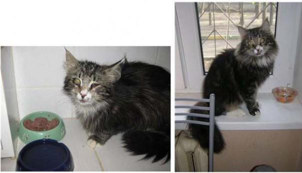Γάτες πριν και μετά τη διάσωση τους (11)