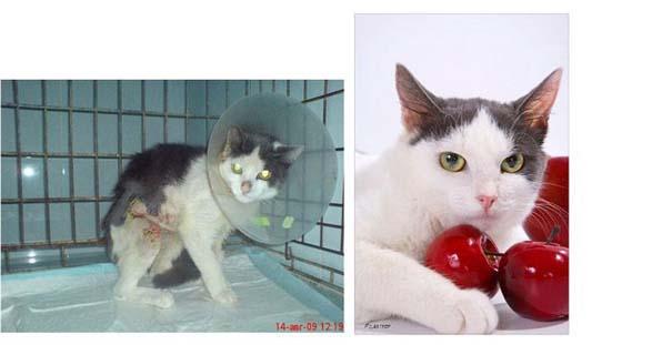 Γάτες πριν και μετά τη διάσωση τους (12)